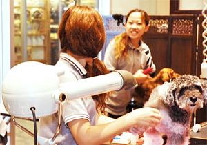 ペットの健康と美容を維持するためのトリミングサービス